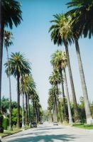 beverly hills by genevi143