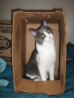 Doug in the Box by cam-stock