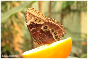 Stockphoto: The Butterfly by JR-Dept