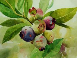blueberry by farhah