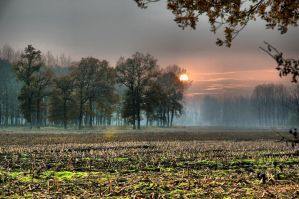 Sun behind trees version 1 by Wil-028