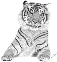 Sumatran Tiger by ConsciousCreations