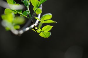 fresh green spring wallpaper by upiir