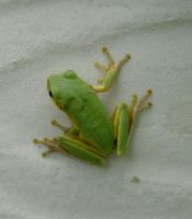 Frog 008 by Moose-Stock
