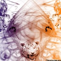 Tiger Family by DistortedOrion