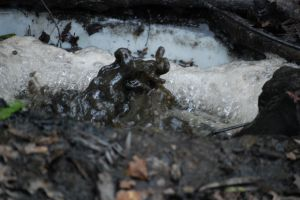 tar pit by MLeighS