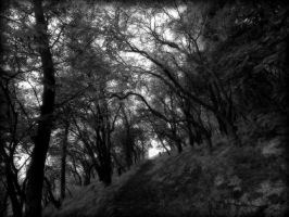 In the Woods by Simona777