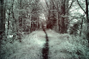 The Path by bmh1