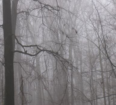 My-Stock - Foggy2 by my-stock