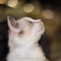 Animal Expo 2013 - III by darkcalypso