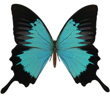 E-S Butterfly V by Elevit-Stock
