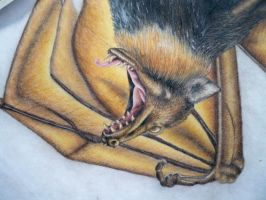 Flying fox facial close up by the-jabber-wocky