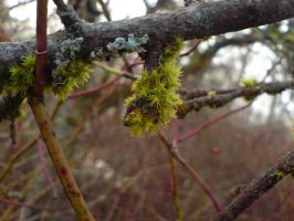 Mossy branch -2008Det6 by Dreamplayer