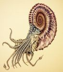 Spiral nautiloid, color image by Parsons