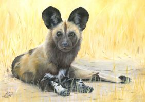 African Wild Dog by Mg-III
