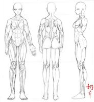 Study: Muscles F. by nai-XaIn