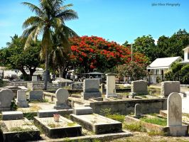Key West Cemetery 2 by GlassHouse-1