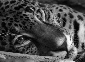 Black and White Week #7: Eyes on You by robbobert