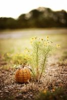 Autumn Forever by garnettrules21
