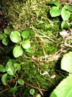 moss and leaves by Mind-Illusi0nZ-Stock