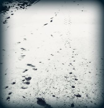 puppy tracks by kvetched