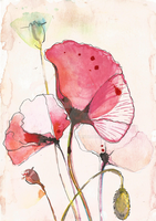Plant_Poppies by AoraPL