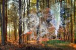 Four seasons of the forest, Thetford, UK by aglezerman