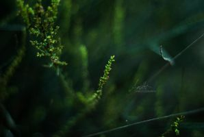 Little miracle by Andriandreo