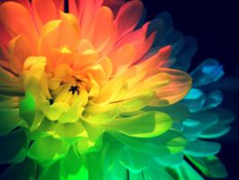 Rainbow Flower Power by ladybyrdvisions