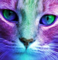 Colorful Cat by Rcdevils