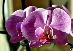 OrcHidee SoYeuSe by Fre-D