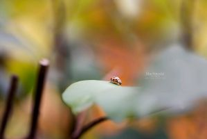 Ladybug in the fall by Marloeshi