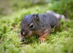 Makita the Squirrel by shawnstorm