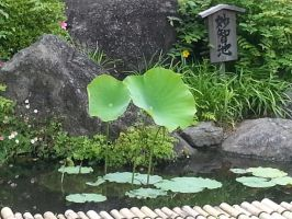 Lilies sprouting from the pond by ddrfr33k