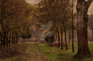 Park in autumn by fodorpetya