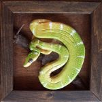 Emerald tree boa by python2123