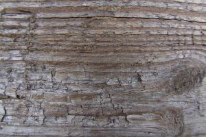 Wooden Texture II by EverythingIsInStock