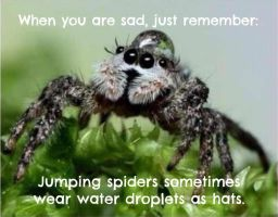 Spider Wearingdroplet As Hat by LadySakuraAvalon