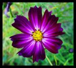 .Purple Passion. by StarStruckMiracle