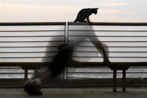 Cat Man by ahermin