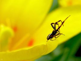 spring_macro-life by InnocentRage