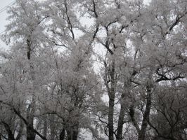 Frosty Branches by tragicalsmiles