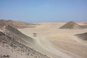 Tree in Desert I by MementoX
