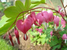 Bleeding Hearts by x-xlost-and-alonex-x