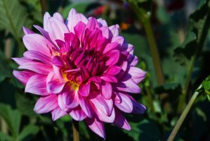 From The Garden 7 by Pablo-Toledo