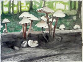Mushrooms by alanbecker