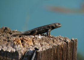 Lizard at the Lake by Earthmagic