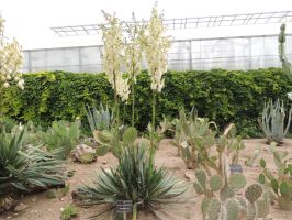 yucca filamentosa by exit-humanity
