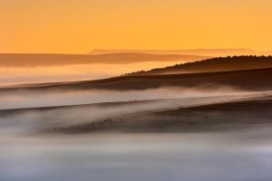 Cows in the mist by carlosthe
