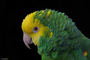 Parrot Profile by TerribleTer
